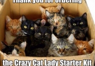 The Crazy Cat Lady Starter Kit! – Get Your's Today…