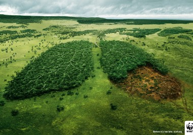 Earth's Environmental Health… Are We Making the Right Choices?
